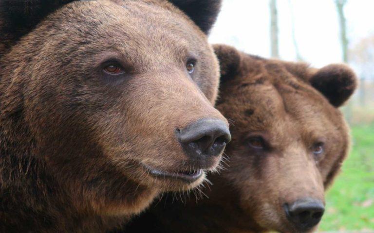 osos_parque_el_hosquillo_cuenca_mirandoacuenca.es