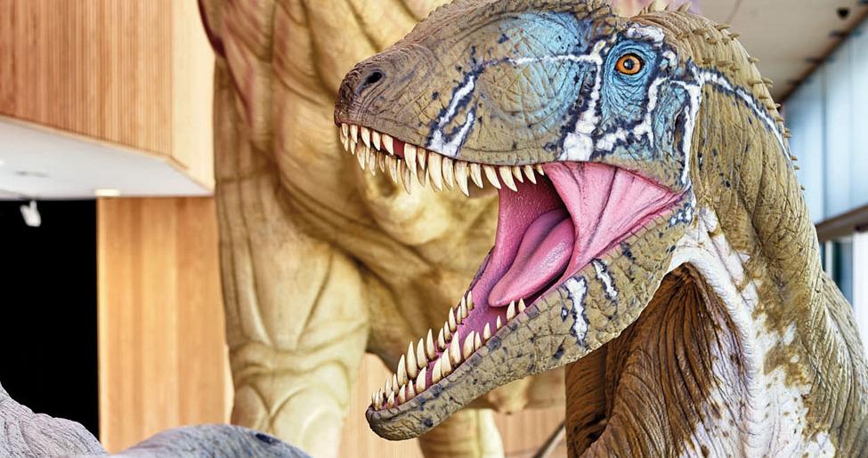 museo_paleontologico_cuenca_cerca_mirandoacuenca.es